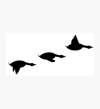 Duck Flight Photographic Print