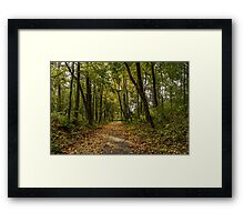 The road between yellow trees Framed Print