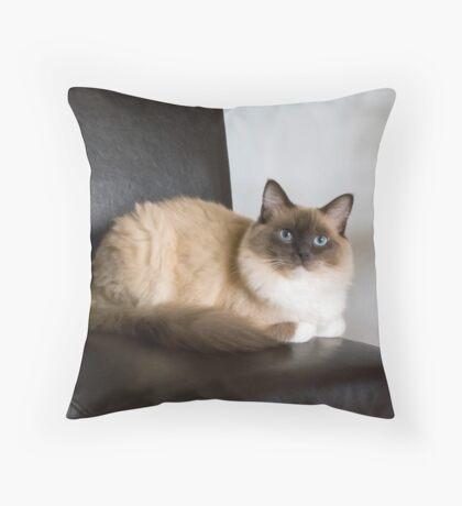 American Ragdoll Throw Pillow