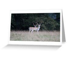 Deer Park Greeting Card
