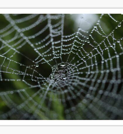 Spiderweb Water Sticker