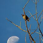 Bird & Moon by Daniel Owens