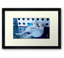 White kittens playing Framed Print