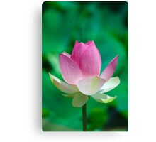 Amazing Pink Lotus Opening. Cards, Art print, Poster Canvas Print