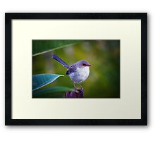 Perched... Framed Print
