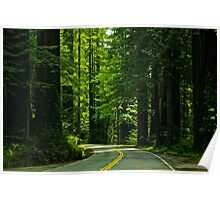 Avenue of the Giants Poster