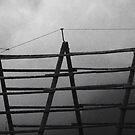 Bird resting on a stockfish rack by Daphne Kotsiani