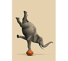Amazing Balancing Elephant Photographic Print