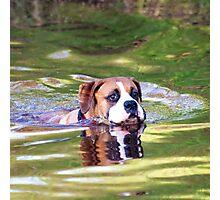 Boxer dog swimming  Photographic Print