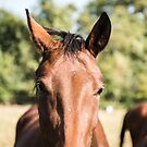 Beautiful horse by pahas