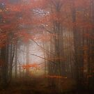 Autumn Mood by Philippe Sainte-Laudy
