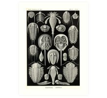 Aspidonia - Ernst Haeckel Art Print