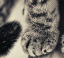 leonardo's paws Sticker