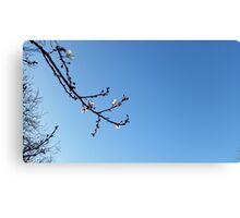 Spring branch Canvas Print