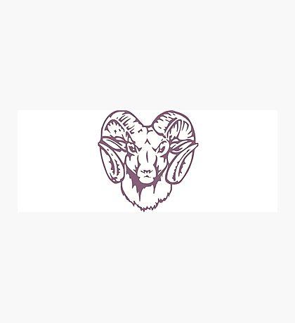 purple ram  Photographic Print