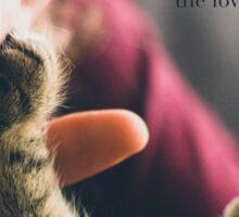 A cat, an amazing gift Sticker