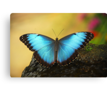 Blue Butterfly... Canvas Print