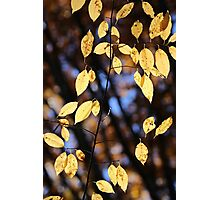 Fall Yellow 11 Photographic Print