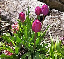 Creekside Tulips by SuSparrow