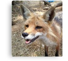 Smiling Red Fox Canvas Print