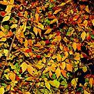 Autumn Palette by Diane Arndt