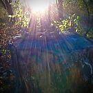glory bends the sun by evon ski