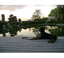 Zen Doberman Photographic Print
