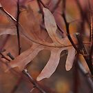 Trapped in barberry thorns... by Poete100