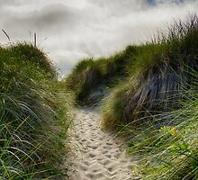Dune Trail by yellocoyote