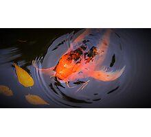 Autumn Koi Photographic Print