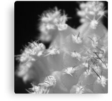 Black and White Cactus Canvas Print