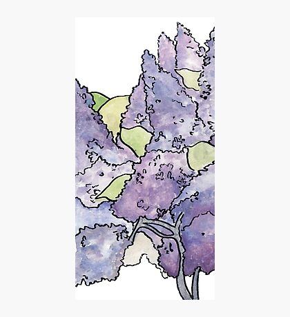 Double Lilac  Photographic Print