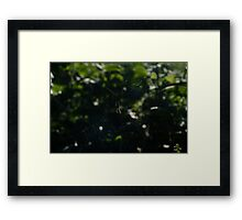 Orb Spider & Web Sunlight Shining Through Framed Print