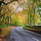 An English Road in Autumn ( 1 ) by Larry Lingard-Davis