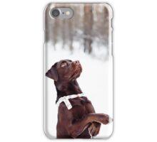 Pretty brown Labrador Retriever iPhone Case/Skin