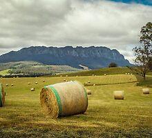 Hay Roland by TonyCrehan
