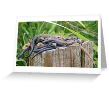 Common Lizards (Zootoca vivipara) bundled on a single log for its' warmth. Greeting Card