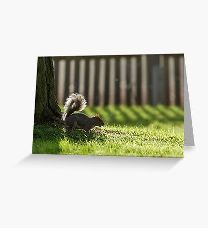 Grey Squirrel (Sciurus carolinensis) foraging in the park in winter. Greeting Card