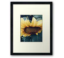 Sunflower Up Close Framed Print