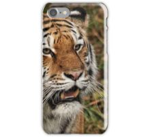 Amur Tiger - Panthera tigris altaica iPhone Case/Skin