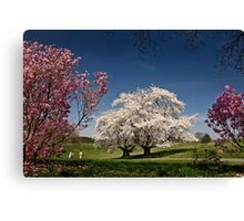 Spring memories Canvas Print