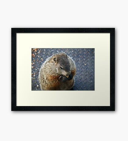 This is what I've been missing - got me a peanut! Framed Print