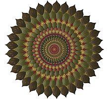 November Sunflower Mandala Photographic Print