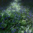 Bluebell Light by Ann Garrett