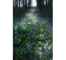 Bluebell Light Photographic Print