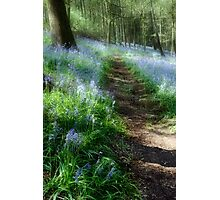 Bluebell Rise Photographic Print