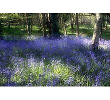 More Bluebells Photographic Print