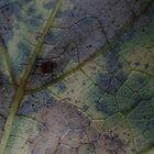 Leaf Detail 2 by vigor
