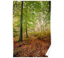 Autumn Path Poster