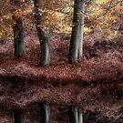 Autumn Reflections by Ann Garrett
